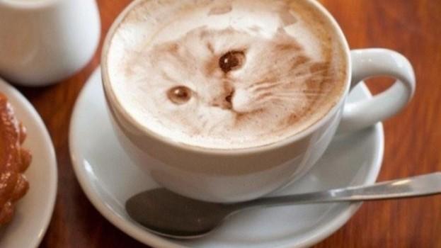 Neuveriteľné obrazy mačiek vytvorené z mliečnej peny