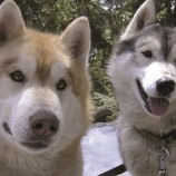 Muž si nevedel rady s nepokojnými psíkmi. Dostal geniálny nápad!