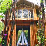 Počas dovolenky sa zamilovala do dažďového pralesa. Postavila si v ňom úchvatný mini dom!