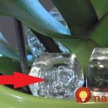 Nezvyčajné triky, ako prinútiť orchideu kvitnúť!