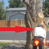 Susedia si mysleli, že muž chce pahýľ stromu spíliť. On však urobil niečo úžasné!