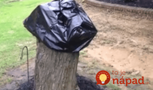 strom 1