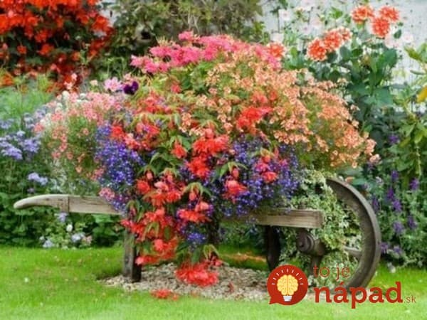 beautiful-flowers-in-the-garden