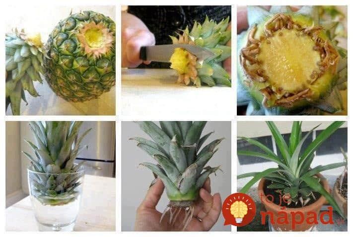 pineapple-934x