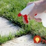 Burina a tráva na chodníku či terase? Už nikdy viac, pomôže jediná surovina z vašej kuchyne!