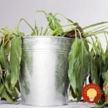 Vyzerajú vaše kvetináče TAKTO? 4 triky, ako im vrátiť život!