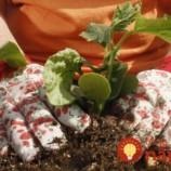 TIETO rastliny ochránia vašu záhradu pred inváziou škodcov!