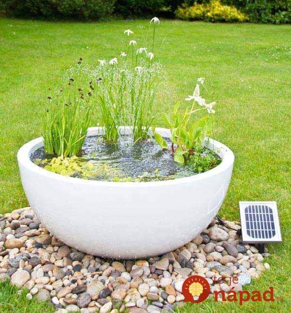 AD-Mini-Pond-In-A-Pot-18