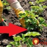 Tieto rastliny by mali mať miesto v každej záhrade. Neuveríte, čo dokážu s vašou úrodou!