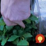 Najúčinnejšie hnojivo pre vaše rastlinky? Celý čas ho máte pod nosom!