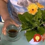 Chcete, aby vaše izbové rastliny častejšie kvitli a žiarili farbami? Vyskúšajte najjednoduchší tip skúsených pestovateľov!