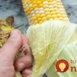 Máte radi grilovanú kukuricu? Vyskúšajte ju pripraviť TAKTO a inú už chcieť nebudete!