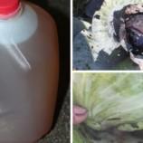 2 účinné prírodné recepty, ktoré ochránia vašu záhradu pred škodcami