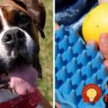 V lete trápia blchy našich psíkov najviac: TAKTO jednoducho im môžete pomôcť!