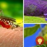 7 rastlín, ktoré vás ochránia pred dotieravými komármi