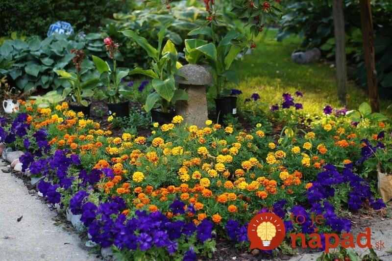 marigolds-summertime-plant_800x1 (1)