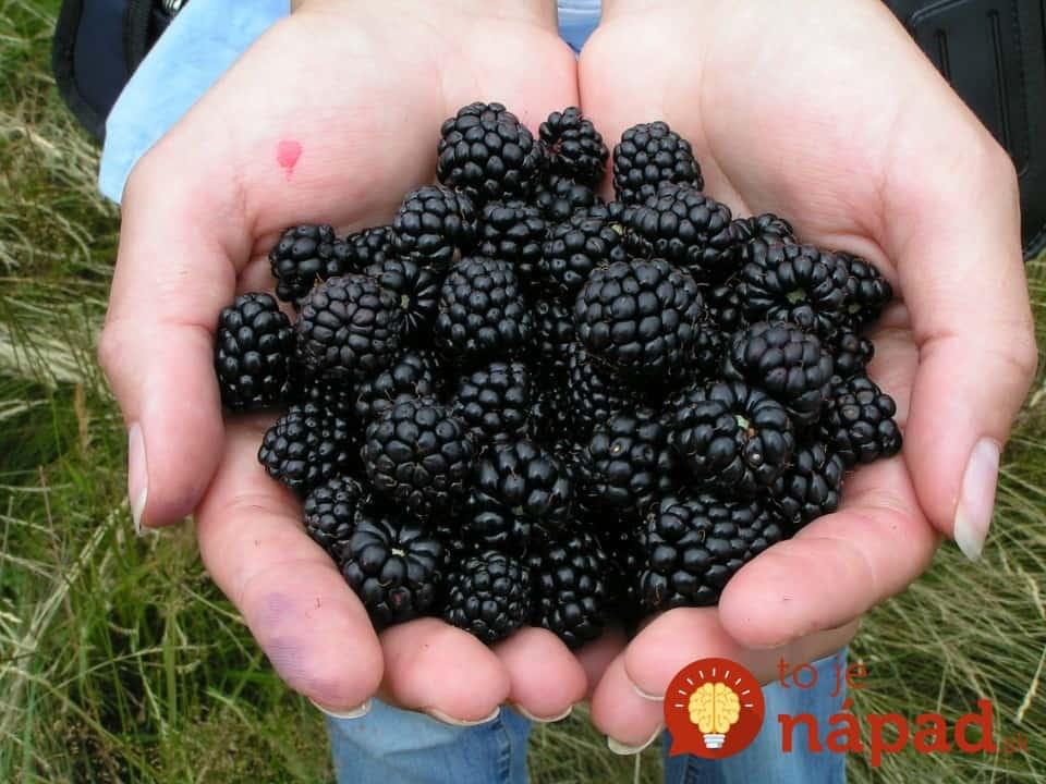 blackberry-214754_960_720