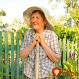 Zabudnutý zázrak z babičkinej záhrady. Znižuje cukor, cholesterol aj tlak!