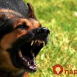 2 triky, ako sa ubránite akémukoľvek útočiacemu psovi