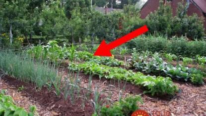 Nedocenený poklad z našich záhrad: Na túto zeleninu zabúdame a prichádzame skutočne o veľa!