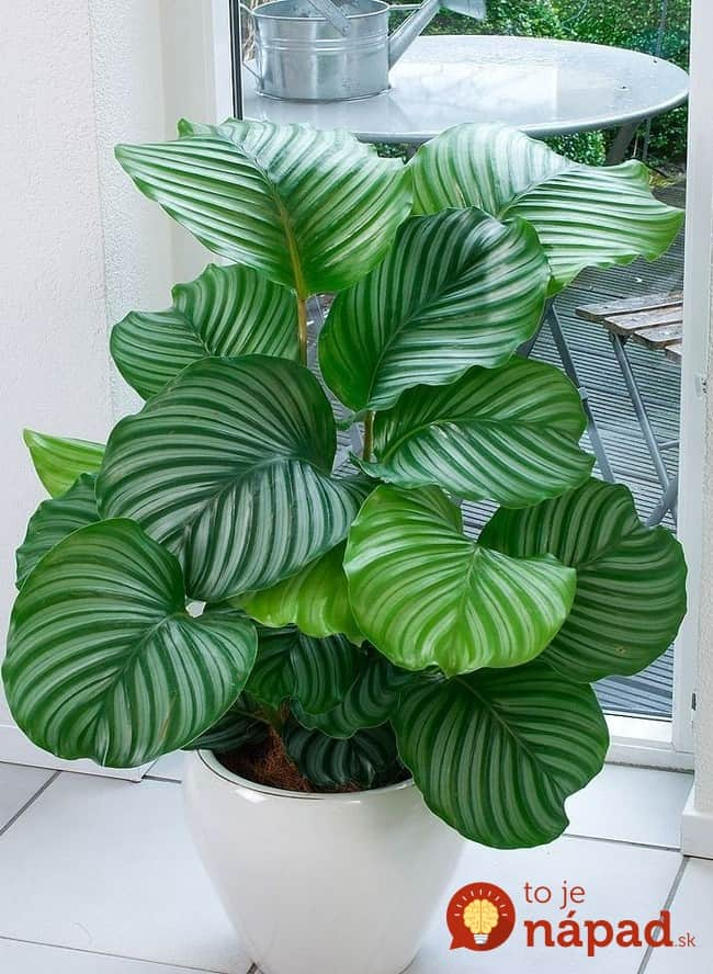 308705-650-1457288709-calathea_photo_05of36-650x888