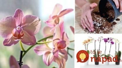 Máte doma orchideu? Potom by ste rozhodne mali vedieť toto!