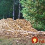 Ľudia, ktorí povýšili ukladanie dreva na umelecké diela. Pozrite sa na ich najkrajšie výtvory