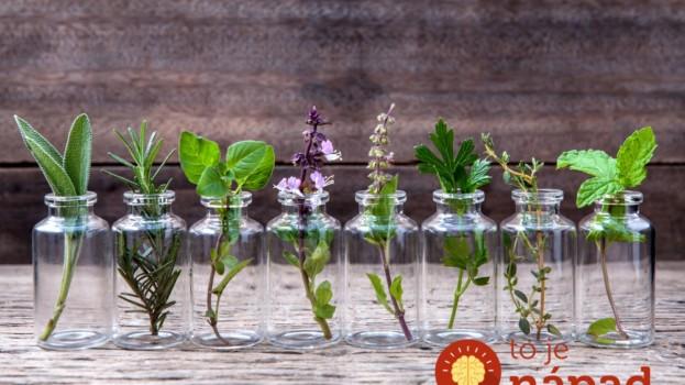 Netreba vám ani centimeter pôdy: 10 rastlín, ktoré môžete pestovať vo vode celý rok