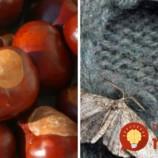 Gaštany ako ich nepoznáte: Tušíte, čo všetko nenápadný plod skutočne dokáže?