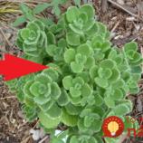 Zabudnite na nádchu a spreje do nosa: Dajte si do izby túto rastlinu!