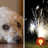 Jednoduchá metóda, ktorá pomôže domácim zvieratkám so stresom z pyrotechniky