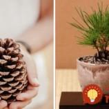 Voňavý experiment u vás doma: Ako si vypestovať mini stromček zo šišky?