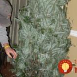 Perfektný trik, vďaka ktorému vydrží živý vianočný stromček dlho čerstvý bez opadaného ihličia