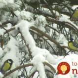 Nenechajte vtáčiky cez zimu zmrznúť. Ľahký spôsob ako im zachránite život aj vy