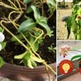 Jednoduchý trik, ako zistiť, či vašim rastlinkám chýba svetlo alebo ho majú nadbytok