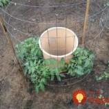 Muž prišiel s geniálnym nápadom, ako pestovať paradajky: Má vďaka nemu dvakrát väčšiu úrodu ako ostatní!