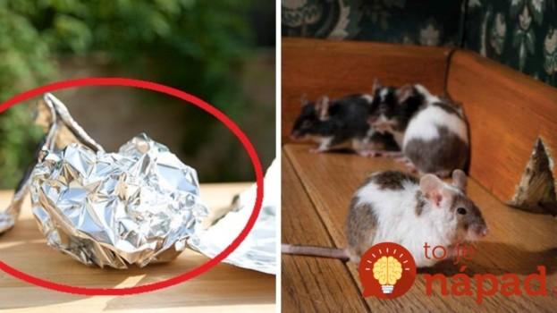 Geniálny trik s alobalom, ktorý vás raz-dva zbaví myší v dome!