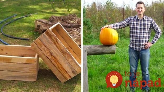 Muž sa rozhodol po prvýkrát pestovať tekvicu vo svojej záhrade: Čo vymyslel, teraz velebia všetci susedia a budete aj vy!