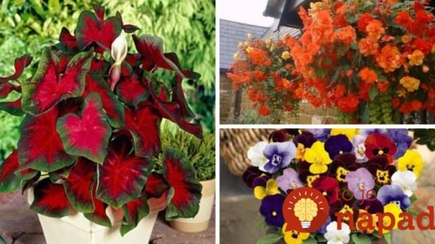 Najvďačnejšie balkónovky: 8 rastlín, ktoré prežijú aj na najtmavšom balkóne, okne či terase!