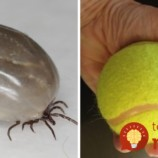 Trik s tenisovou loptičkou, ktorý by mal poznať každý, kto má doma psa!
