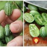 Táto mini-zelenina patrí medzi najzdravšie na svete: Neuveríte, ako jednoducho ju dopestujete vo svojej záhrade!