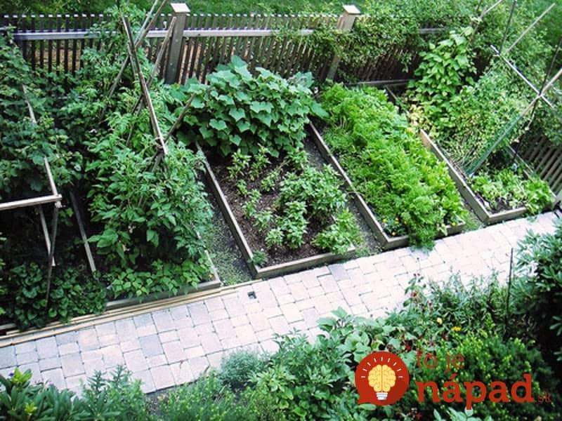17 najlep ch susedov ak zasad te tieto rastliny ved a for The garden design sk