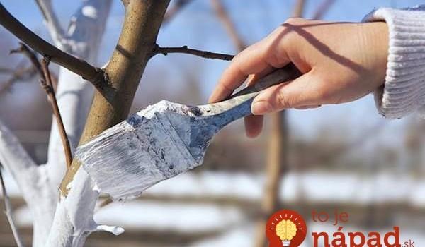 Nechráni len pred mrazmi: Toto je dôležitý dôvod, prečo vaše stromy musíte na jar natrieť vápnom