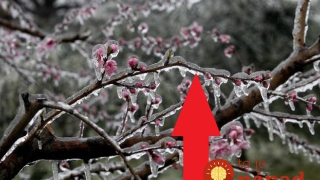 Starodávny trik, ako ochrániť rozkvitnuté stromy pred jarnými mrazmi: Toto radia skúsení záhradkári!