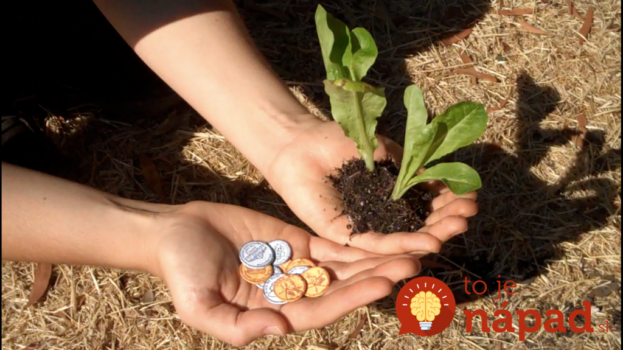 Viete, prečo naše babičky vkladali do pôdy v záhrade mince? Tento zvláštny trik vám skvele poslúži aj dnes!