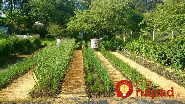Toto je najjednoduchší trik záhradkárov, ako zatočiť s burinou: Neobjaví sa počas celej sezóny!