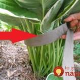 Odteraz budete mať opasok vždy v záhrade poruke: Pozrite sa, na čo ho používa táto záhradkárka!