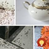 Toto zaberie vždy: 3 úplne jednoduché spôsoby, ako sa zbaviť mravcov v byte či dome