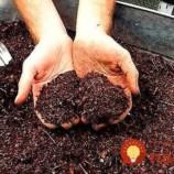 V obchode ho nekúpite a vo vašej záhrade dokáže zázraky: Tajný rodinný recept na zázračné hnojivo, na ktoré nedám dopustiť