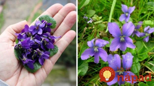 Tieto drobné kvietky poznáme už od detstva: Ak ich nájdete na záhrade, máte šťastie, je to hotový dar z nebies!